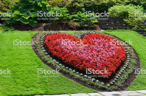 shaped flower bed stock photo more pictures of