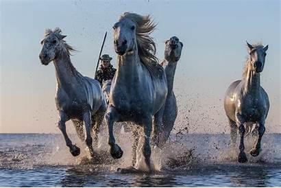 Western Horse Cowboy Hgr Desktop Wallpapers Horses