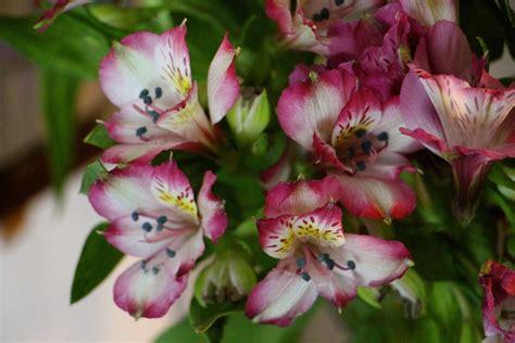 top varieties  cut flowers