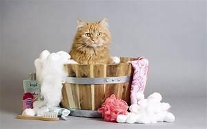 Laver Un Chaton : comment laver un chat sans se faire griffer comment laver ~ Nature-et-papiers.com Idées de Décoration