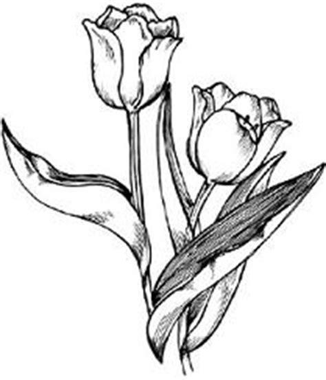 tulip clipart black and white free tulip clipart clipartix
