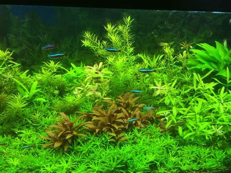 plantes aquarium eau douce aquarium d eau douce l aquariophilie pour les poissons d eau douce