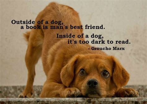 quotes  dogs  friendship weneedfun