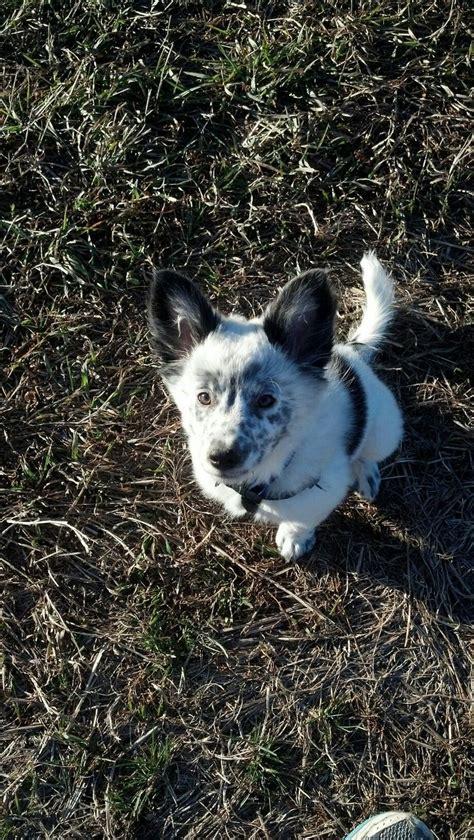 images    puppy  pinterest blue