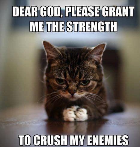 Cute Cats Memes - cat memes 25 cute and funny cat memes badass memes com funny pinterest funny cat memes