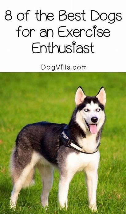 Dog Breeds Dogvills Exercise