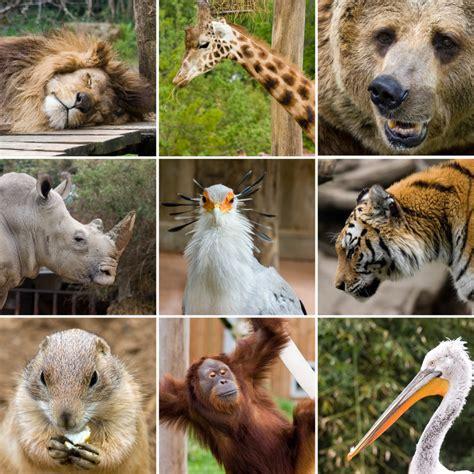 collage animal zoo zoos dierlijke animals phylum mammals stockafbeelding wild sabinoparente hayvan animales imagen chordata kolaj classification mammalia salvajes dieren