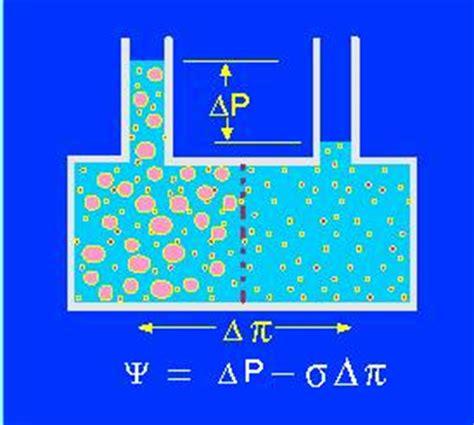 was ist diffusion diffusion und osmose