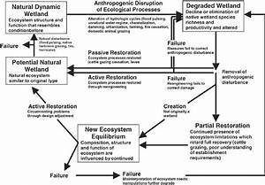 Pathways Of Ecosystem Recovery And The Reintegration Of