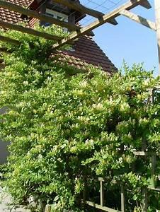 Plantes D Hiver Extérieur Balcon : plantes d hiver pour balcon digpres ~ Nature-et-papiers.com Idées de Décoration