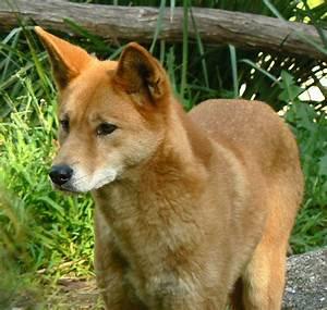 dingo pups | Booksforever1blog. BarkUpToday!