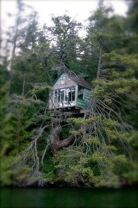 This Awesome Tree House Was Perched In A Tree Along The