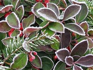 Schöne Pflanzen Für Den Garten : sch ne pflanzen f r den winterlichen garten ~ Michelbontemps.com Haus und Dekorationen