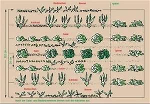 Gemüse Anbauen Plan : gute nachbarn schlechte nachbarn lagerhaus mostviertel ~ Watch28wear.com Haus und Dekorationen