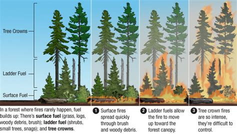 Why Forest-killing Megafires Are The New Normal