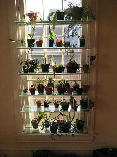 plant window shelves very cool window shelving for orchids etc