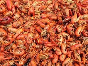 Image Gallery louisiana state crawfish
