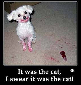 Funny Picture Clip: Archive Funny dog photos with captions