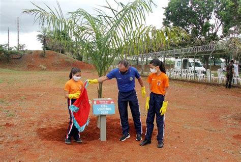 Plantio da Palmeira Imperial
