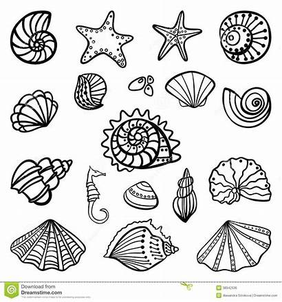 Shells Coloring Pages Beach