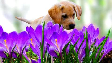 How Often To Shower Puppy by April Showers Bring May Flowers