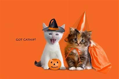 Halloween Cat Funny Dressed Kittens Wallpapersafari Code
