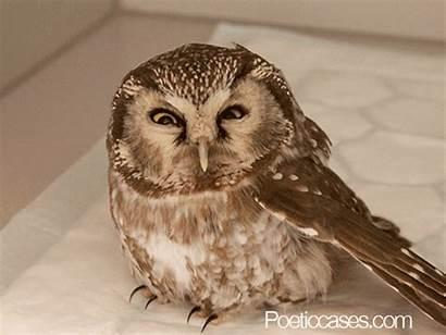 Funny Orly Owl Owls Gifs Animals Wifflegif