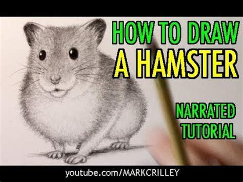 draw  hamster animal tutorial  youtube
