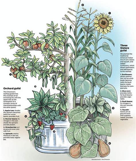 25+ Best Ideas About Forest Garden On Pinterest Outdoors