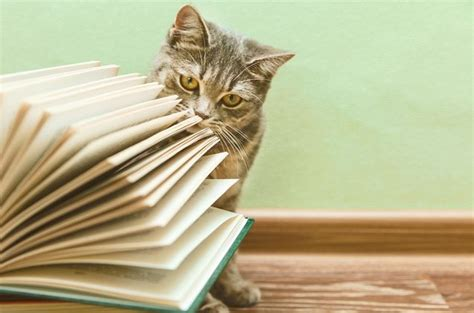 best for cat owners 220 best images about reading cats on