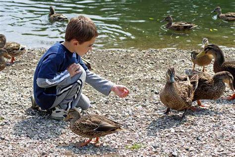 feed the ducks where do i take the kids