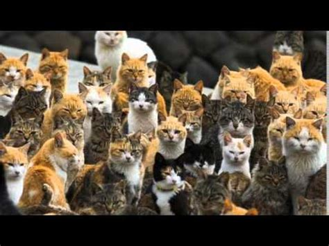 how many cats is too many cats song