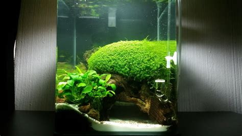 Aquascape Nano by Nano Cube Aquascape