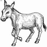 Donkey Coloring Animal Pages Balaam Shrek Getcoloringpages Cartoon sketch template