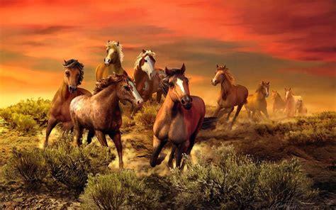 wild horses field bush fire red sky wallpaper hd