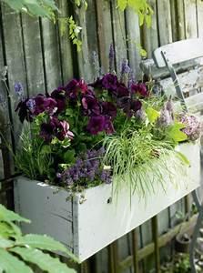 Hängepflanzen Für Balkonkästen : balkonkasten mit federbusch lavendel und edelgeranien ~ Michelbontemps.com Haus und Dekorationen