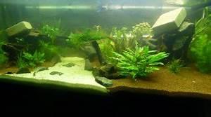 Idee Decoration Aquarium : id e d co pour l 39 aquarium ~ Melissatoandfro.com Idées de Décoration