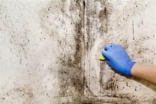 Enlever Moisissure by Moisissure Sur Mur Causes Et Comment Enlever 233 Viter