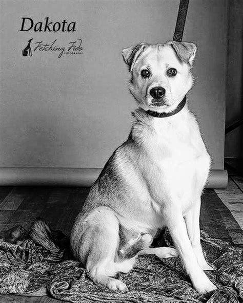 Abington Journal | Griffin Pond Animal Shelter Pet, Dakota