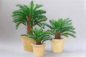 Künstliche Pflanzen Wetterfest Palmenbusch 60cm Im Topf Ga