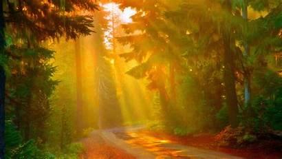 Sunny Forest Wallpapers Resolution Background Backgrounds Desktop