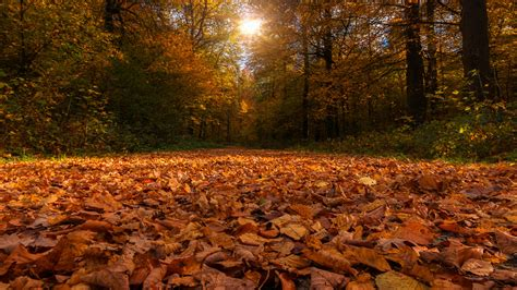 Forest Path Covered By Dry Autumn Leaves And Sunbeam ...