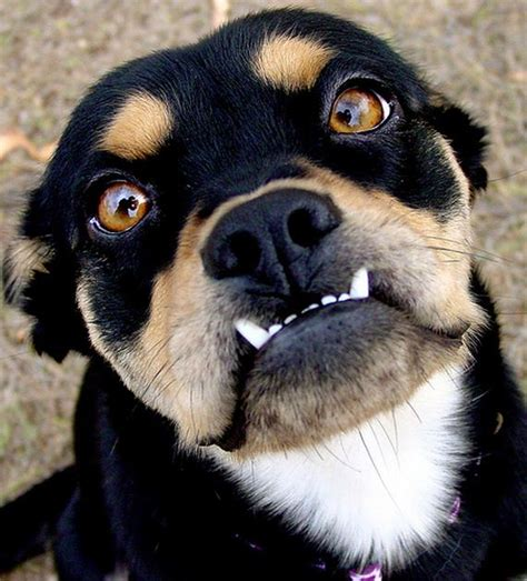 Animals with Funny Underbites - Barnorama