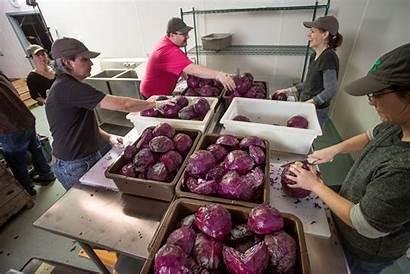 Fermentation Process Pickles Production