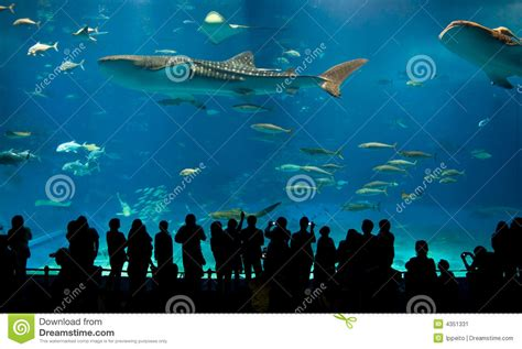 le plus grand aquarium acrylique du monde image stock