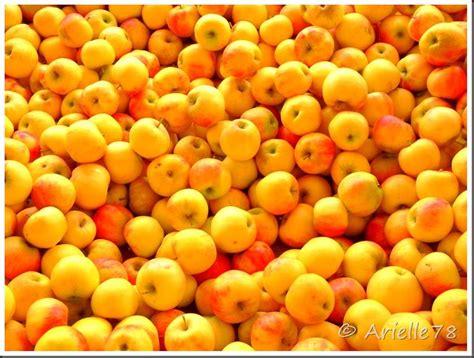 pomme de reinette et pomme d api tapis tapis pomme de reinette et pomme d api tapis tapis photos 78