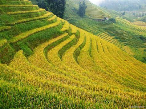 ảnh Chịch Nhau Ko Che