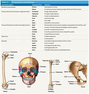 Students Can Explain And Label The Functional Significance Of Each Of The Major Types Of Bon