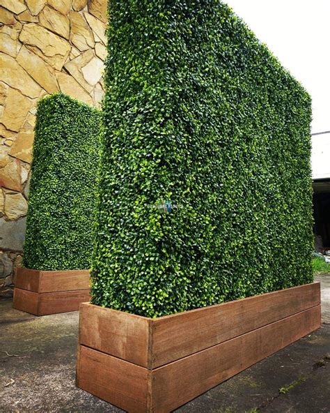 large wood planter large portable mixed boxwood hedges