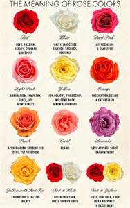 Rose Flower Color Meanings Chart